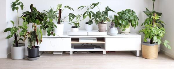 urban-jungle-muitos-vasos-com-plantas-decoração-sala-de-estar