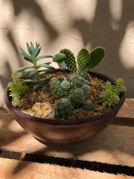plantas-vasos-urban-jungle-cactos-suculentas