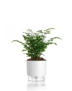 vaso-planta-autoirrigável